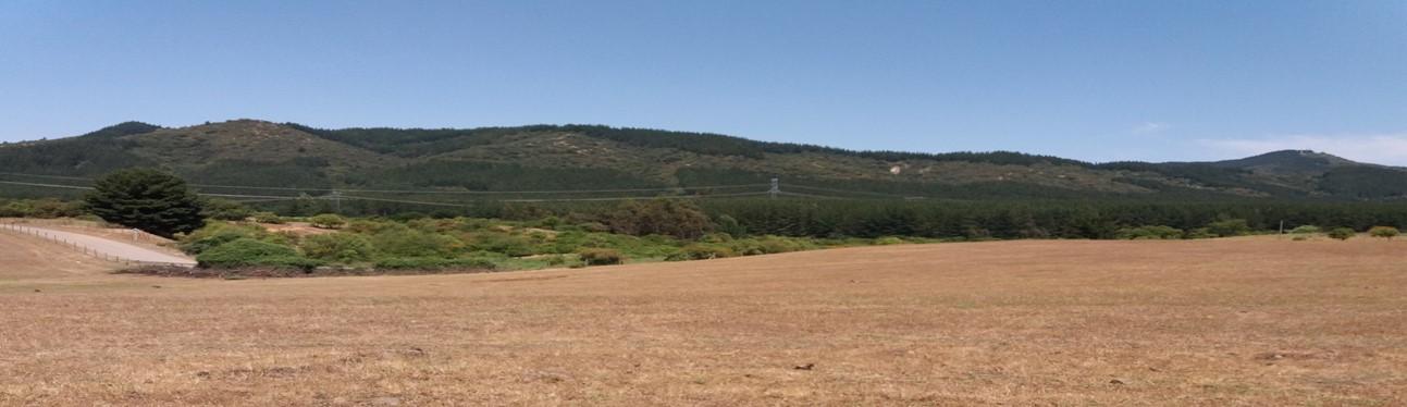 Declaración de Impacto Ambiental Proyecto Fotovoltaico El Olivo